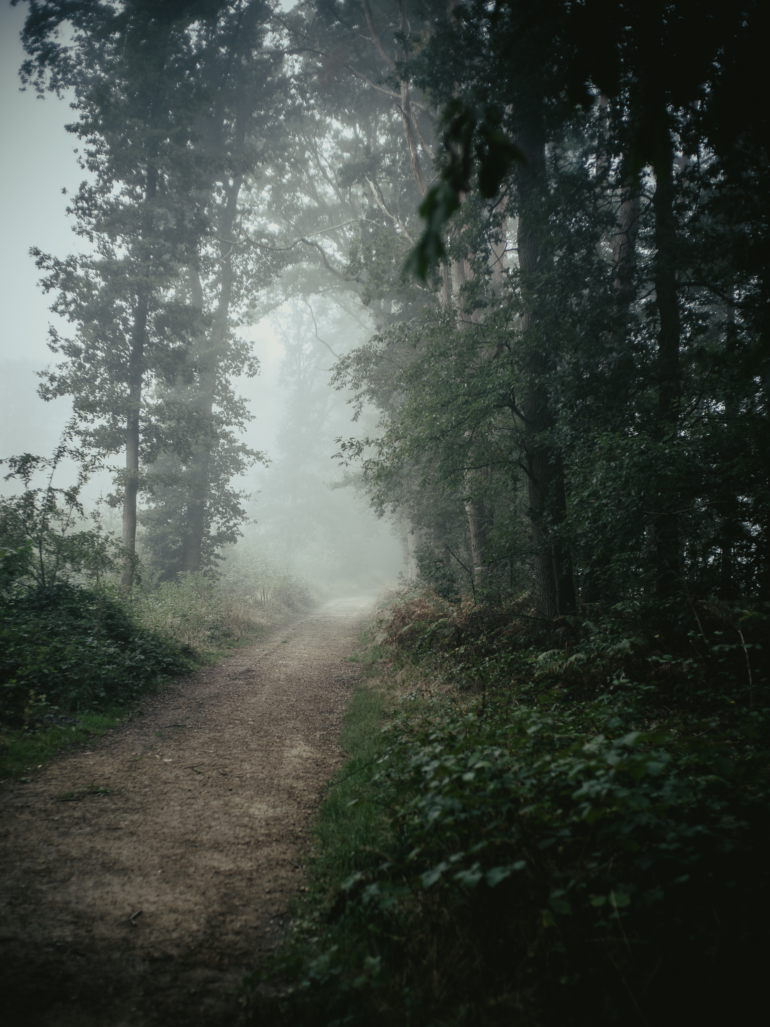 Misty Woods seen and photographed by Martin Nienberg